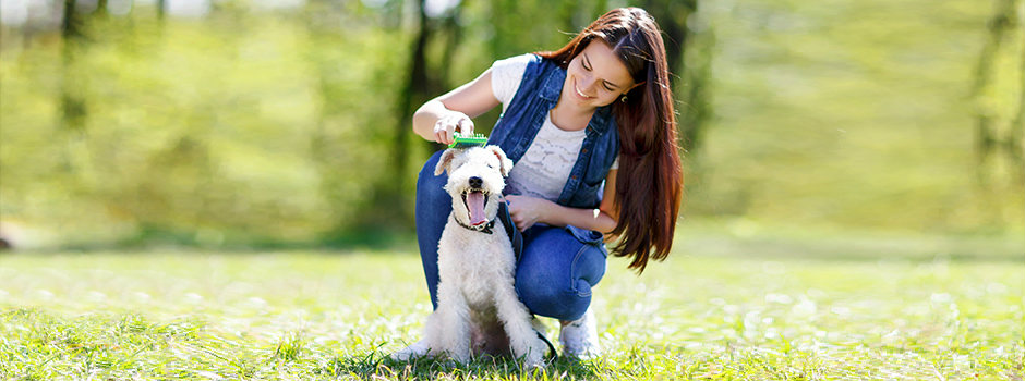Dog Care – Key Issues to Consider