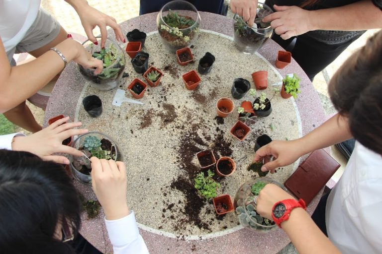 Factors to consider before choosing a terrarium workshop provider